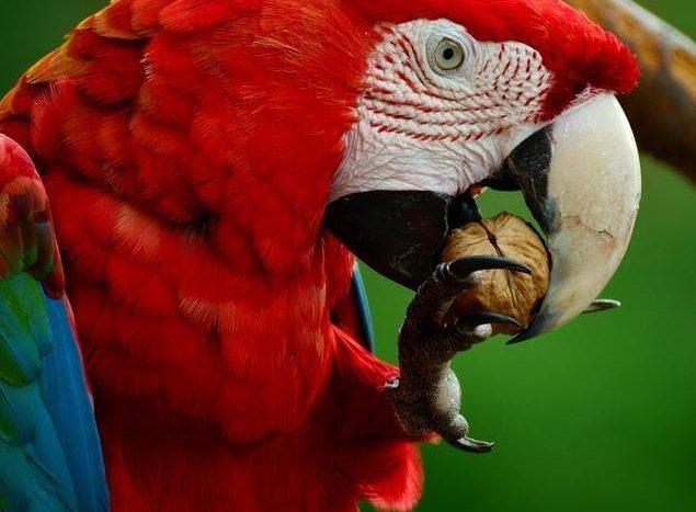 Papoušci Karpacz