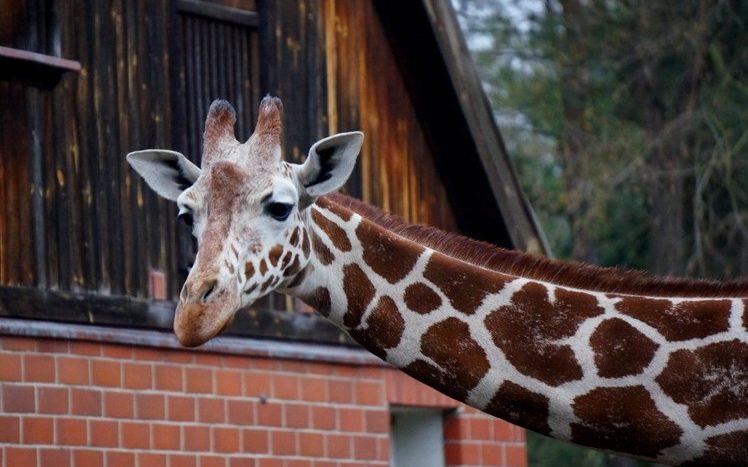 Zoo Wroclaw a Afrikárium